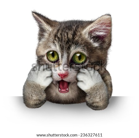 Surprised cat character as a purebred kitten with an anthropomorphic expression of fear on a horizontal blank sign on a white background. - stock photo