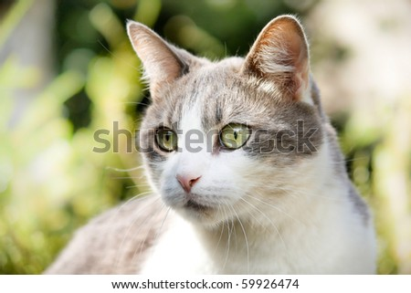 Surprised cat macro shoot - stock photo