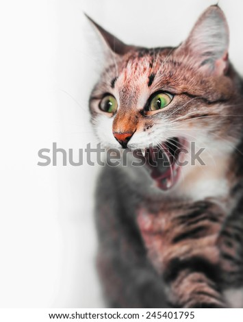 surprised cat or wow face  - stock photo