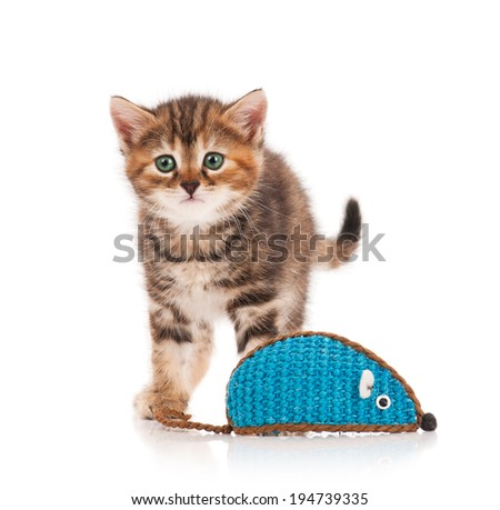 Surprised cute kitten with big toy mouse isolated on white background - stock photo