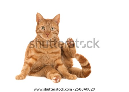 Surprised ginger cat against a white background - stock photo