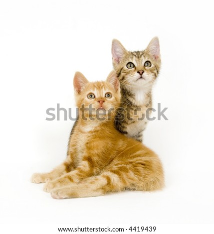 Surprised kittens look straight again on white background