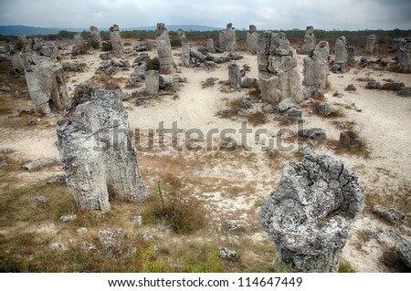 Surprising phenomenon of the nature-Stone Forest in Bulgaria. HDR image