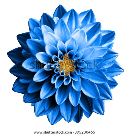 Surreal dark chrome blue flower dahlia macro isolated on white - stock photo