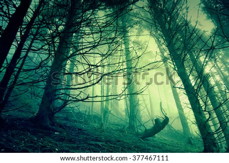 Surreal forest scene: illustration