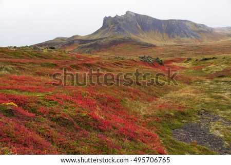 Surreal landscape at the scenic  Snaefellsnes peninsula in Iceland. With autumn leaves and green moss cover lava fields.