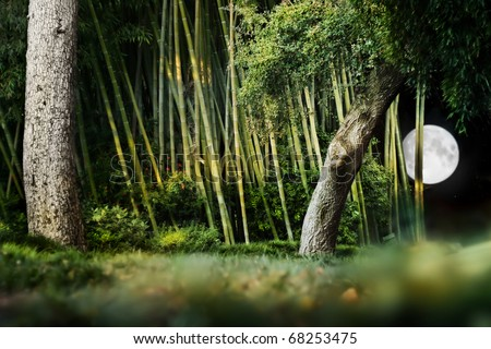 Surreal night landscape composition of a Japanese garden with trees, bamboo and bright moon in night sky. - stock photo