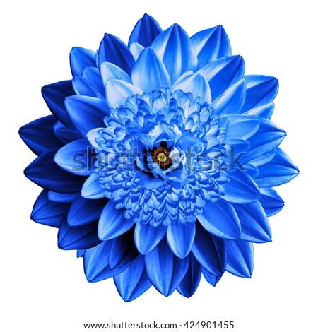 Surrealistic fantasy blue flower macro isolated on white - stock photo