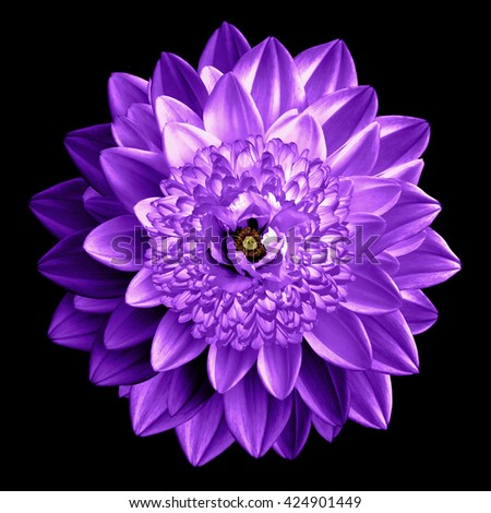 Surrealistic fantasy violet flower macro isolated on black - stock photo