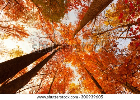 Surrounded by beautiful trees in autumn - stock photo