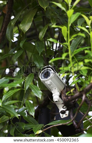 Surveillance camera on pole surround by tree leaves