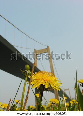 Suspension Flowers - stock photo
