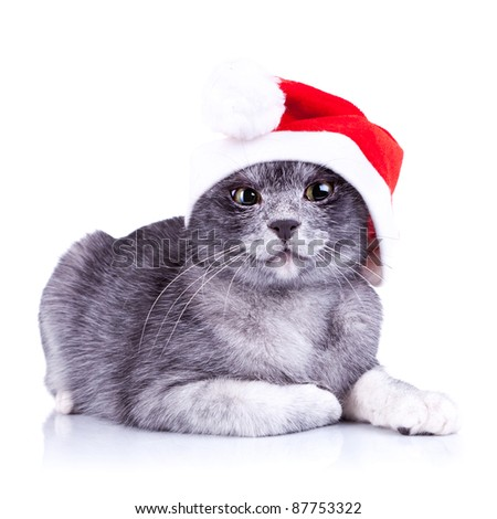 suspicious little santa cat, looking at the camera on a white background - stock photo
