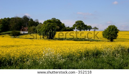 Sussex Field - stock photo