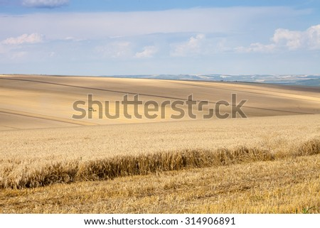 Svishtov - July 3: combine harvests wheat against the blue sky with white clouds on July 3, 2015 Svishtov, Bulgaria