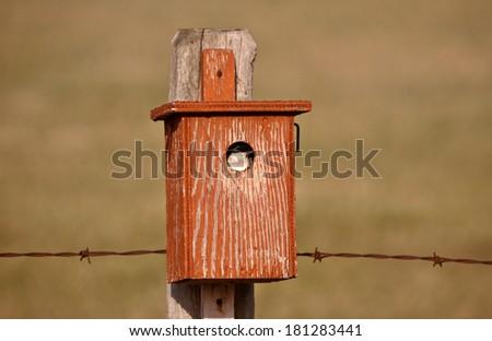 Swallow in bird house - stock photo