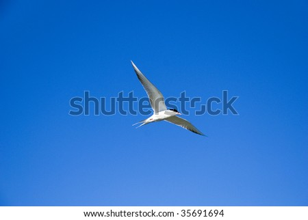 Swallow on sky - stock photo