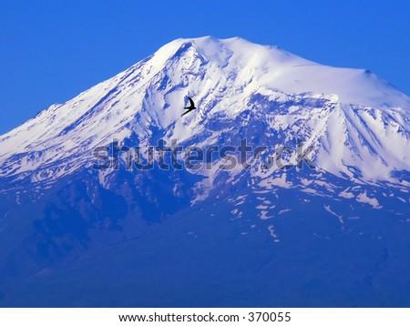 Swallow on the Ararat... - stock photo