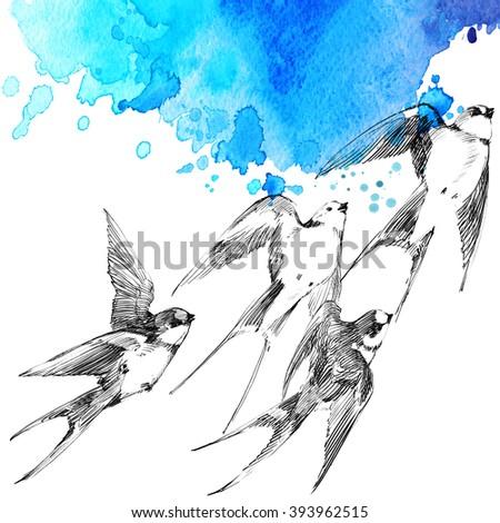 Swallow. Swallow pencil sketch. Spring Bird. Bird Swift. Swift flight - stock photo
