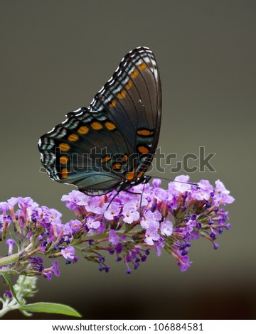 Swallow Tail Butterfly - stock photo