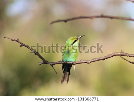 Swallow tailed Bee-Eater - African Birds - Peaceful Greens amongst Paradise Greens - stock photo