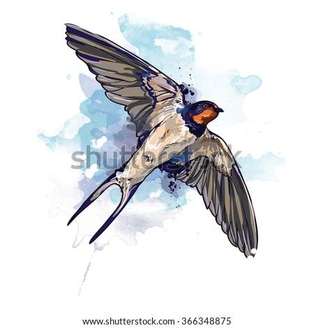 Swallow watercolor. illustration bird. bird flying. watercolor bird - stock photo