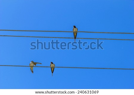 Swallows sitting on electric wires against the blue sky. - stock photo