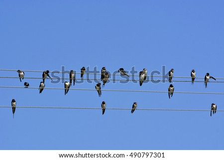 swallows sitting on wires like trends