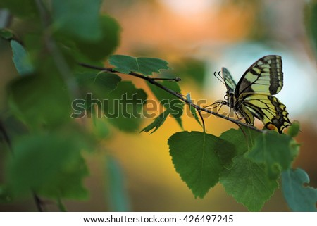 Swallowtail Butterfly in Garden - stock photo