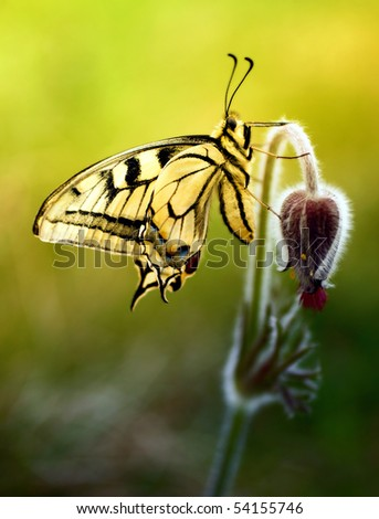 Swallowtail on a flower - stock photo