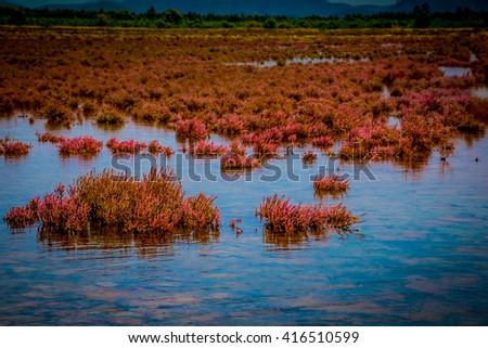 swamp area - stock photo