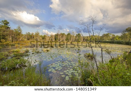 Swamp at Canoe Meadows in Pittsfield, Massachusetts - stock photo