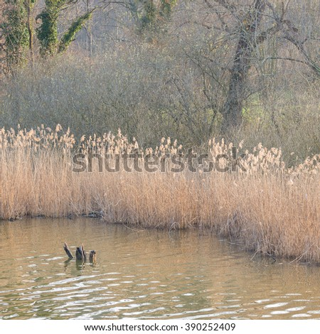 Swamp grass, standing water and woodland in natural dreamy wetland background. Square frame, low contrast, soft light. - stock photo