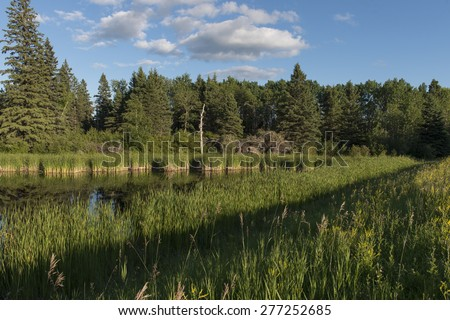 Swamp in a Marsh, Lake Audy Campground, Riding Mountain National Park, Manitoba, Canada - stock photo