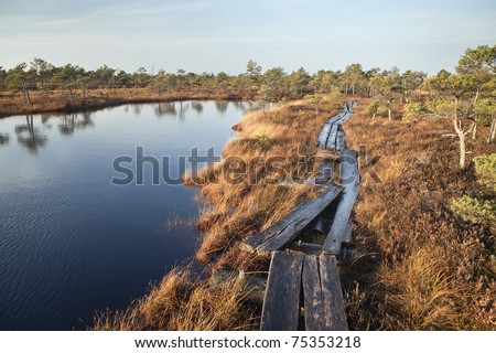 Swamp in Autumn - stock photo