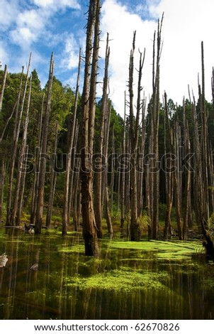 swamp in forest - stock photo