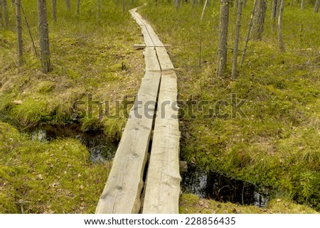 Swamp in may with wooden boardwalk over brook - stock photo