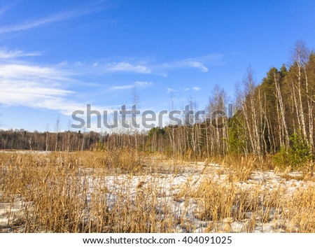 Swamp in russian forest