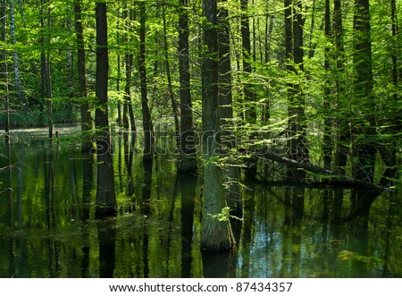 Swamp in the green forest - stock photo