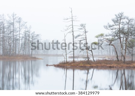 Swamp lake in fog early morning