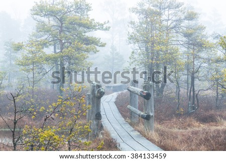 swamp lake in the mist, early morning - stock photo