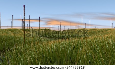 swamp landscape - stock photo