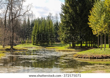 swamp landscape - stock photo