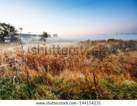 swamp landscape in morning light - stock photo