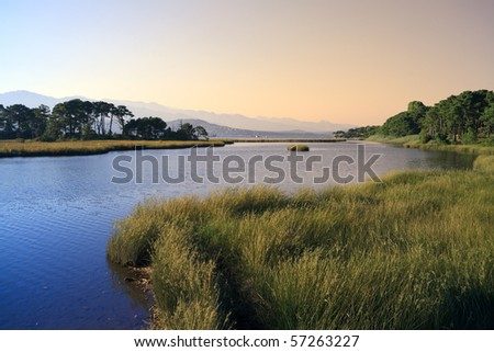 Swamp landscape with grass, trees and mountains, Corsica, France - stock photo