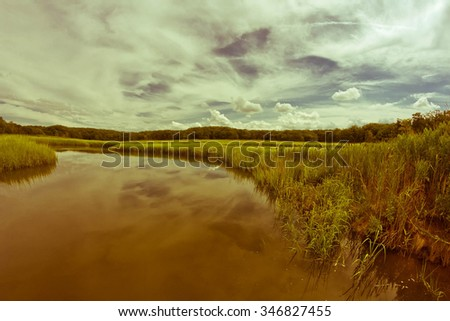 Swamp marsh nature landscape on a bright summer day