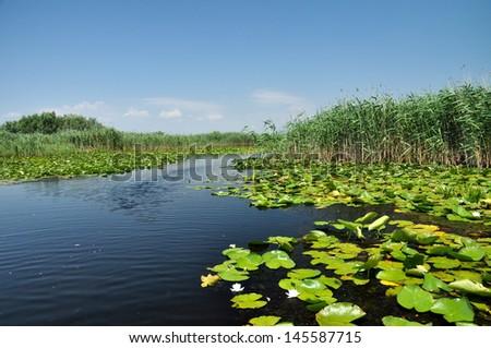 Swamp vegetation in the Danube Delta - stock photo
