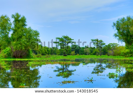 Swamp with Cypress Trees in Atchafalaya River Basin. - stock photo