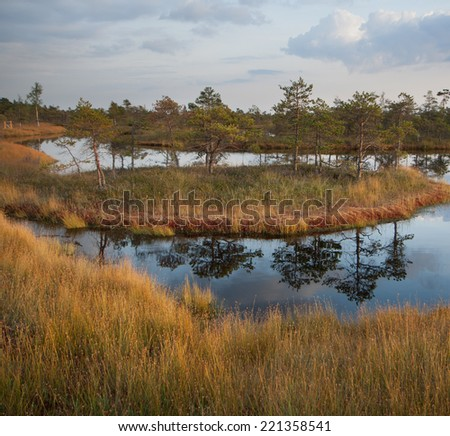 Swamp with grass foreground, pond, small pines and islet. Typical flora. Bright, lively, inviting to visit and walk. Location: Europe, Eastern Europe, Latvia, Kemeri park, big swamp trail. - stock photo