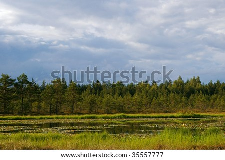 swamp with lake on cloudy summer day in Estonia - stock photo